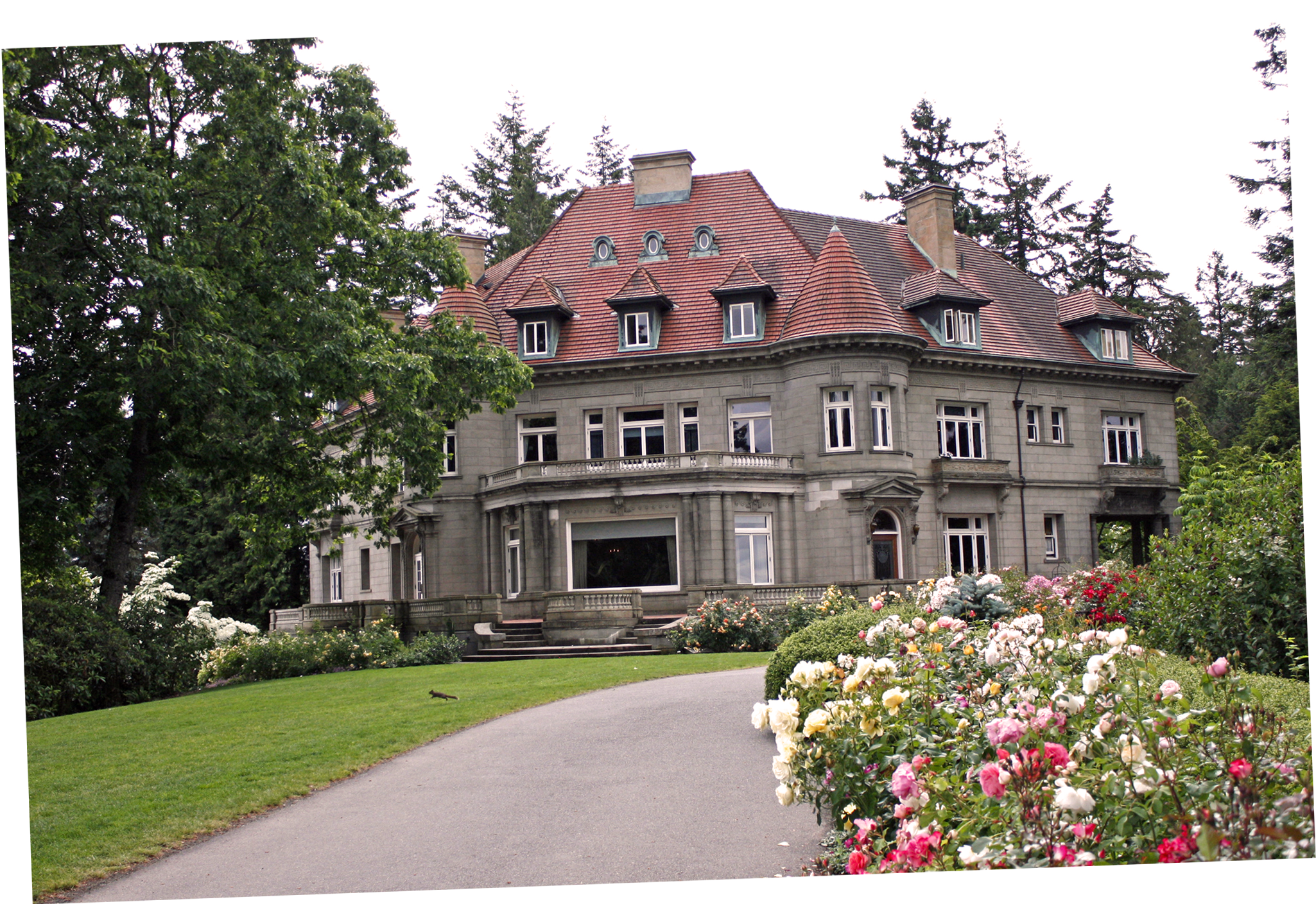 Pittock Mansion, roses in bloom